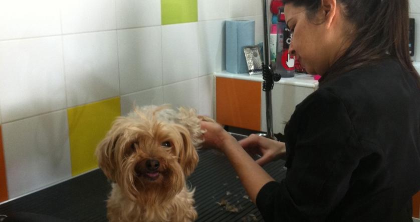 peluqueria-canina-malaga