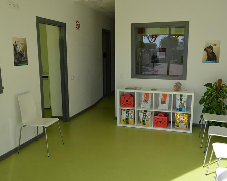 clinica veterinaria teatinos