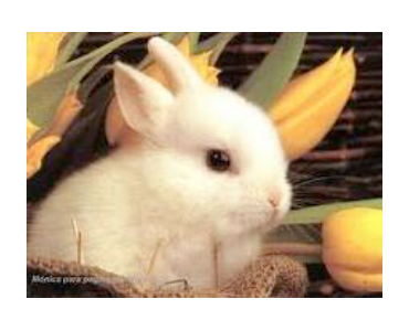dientes del conejo