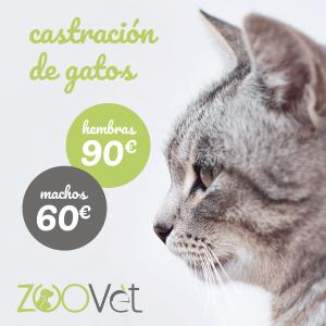 castración de gatos Málaga