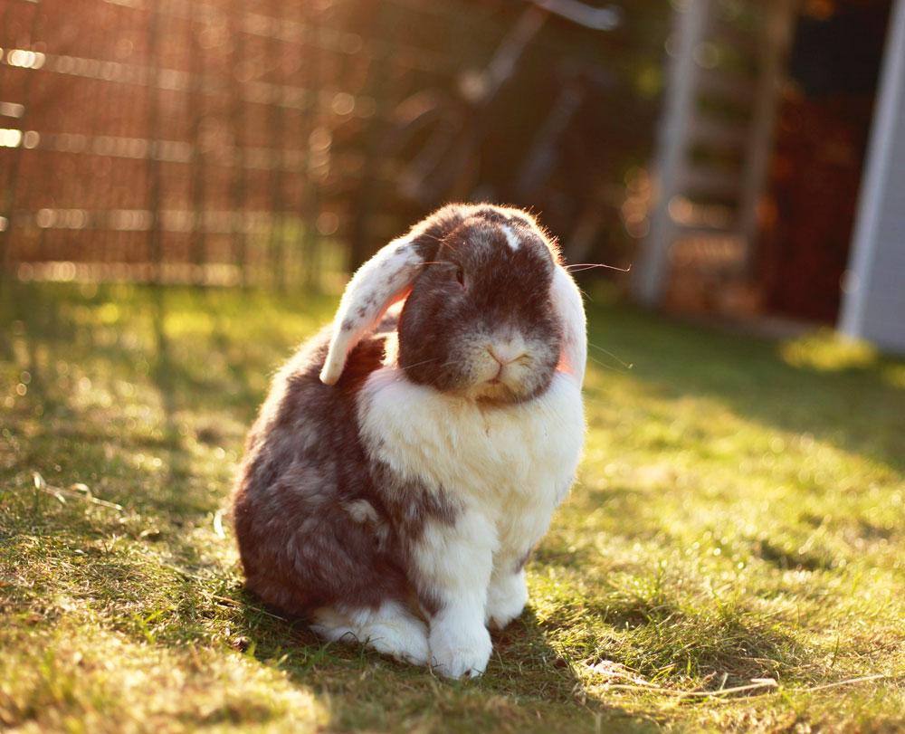 l comportamiento de los conejos