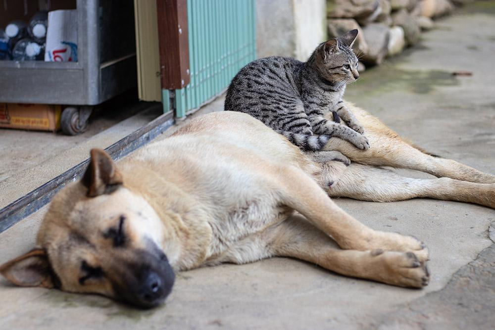 La esperanza de vida en mascotas