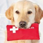 Primeros auxilios en perros ante urgencias veterinarias